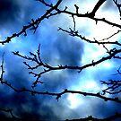 Storm Warning by shawntking