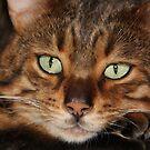 Emerald Eyes by Gilberte