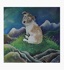 Terrier on a hill top Photographic Print