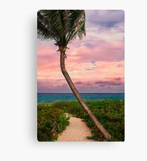 Beautiful palm on a tropic beach. Canvas Print
