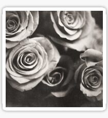 Medium format analog black and white photo of white rose flowers Sticker