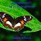 Top Ten Challenge Winner Banner - Closeups in Nature