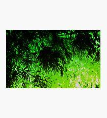 Green Medley Photographic Print
