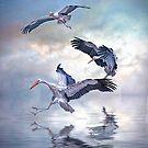 Storks Landing by Brian Tarr