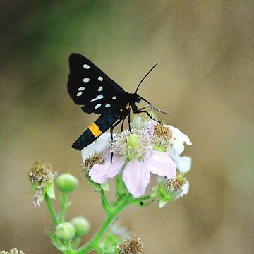 Black Beauty by floreakalapa