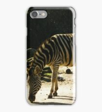 zebras at the zoo iPhone Case/Skin
