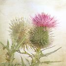 Pink on Green by Margi