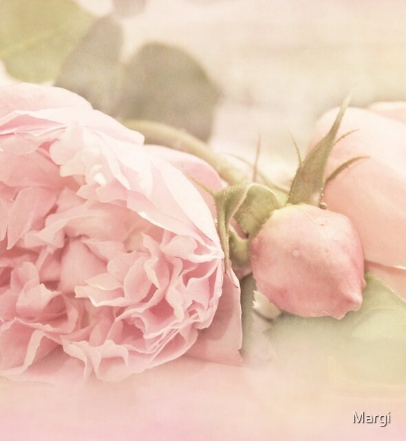 A Little Softness by Margi