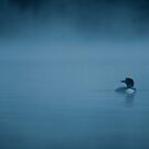 Common loon in blue fog by Jim Cumming