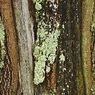 Tree Trunk by CarolM