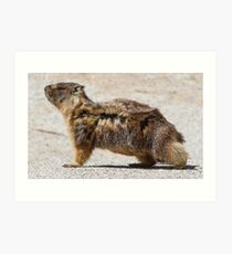 The marmot who poses in the wind Art Print