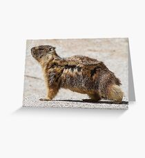 The marmot who poses in the wind Greeting Card