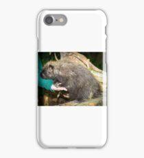 Tame Porcupine iPhone Case/Skin