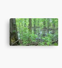 Detroit Swamp - Palmer Park Canvas Print