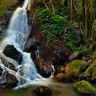 Kondalilla Falls by slonchak