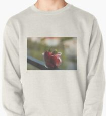 Strawberries in a cup Pullover