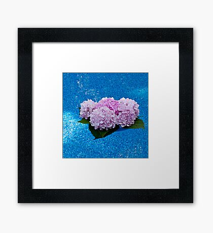 Hydrangeas Floating in the Pool Framed Print