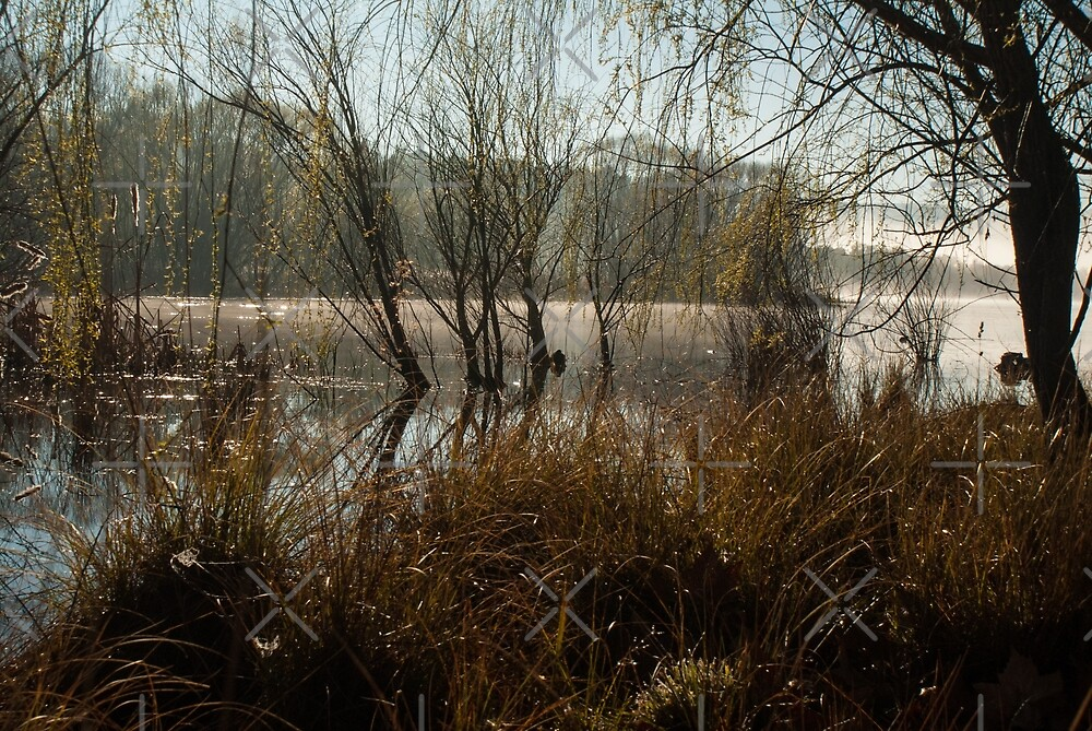 Amongst the Reeds and Rushes - Lake Wallace, Wallerawang NSW by Deborah McGrath
