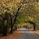 Along the Laneway _ Hill End by Barbara Burkhardt