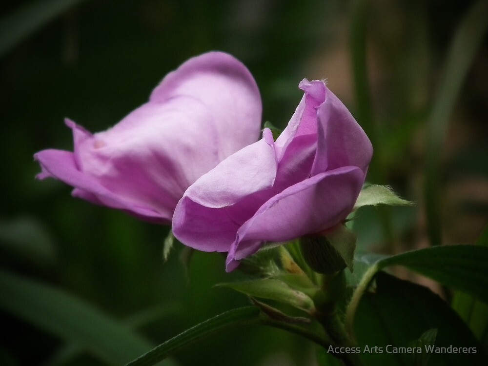 Purple Beauty By Matthew Lys by Access Arts Camera Wonderers
