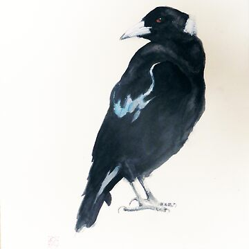 AUSTRALIAN MAGPIE -  THE (BIRD) VOICE by ColinWilliams