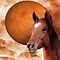 Equine Art and Photography