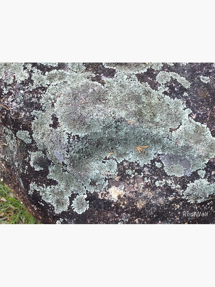 Lichen by redwolfoz