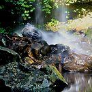 Ceder creek Falls Gold Coast by sarcalder