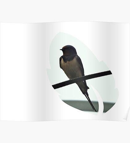 Swallow Leaf Design Poster