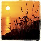 J'ai épinglé le soleil by Jean-Luc Rollier