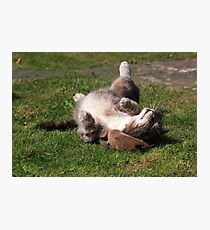 Tabby cat playing with toy mouse Photographic Print