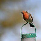 Robin on bird feeder by turniptowers