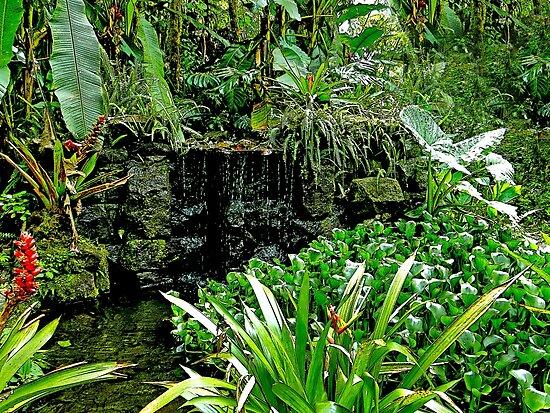 Rain Forest Beauty at Mindo Ecuador by Al Bourassa