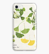 Ginkgo biloba botanical print iPhone Case/Skin