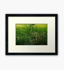 Green Swamp....... Framed Print