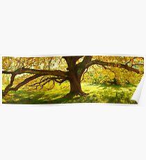 Autumn Colours of Myrtleford, Victoria, Australia Poster