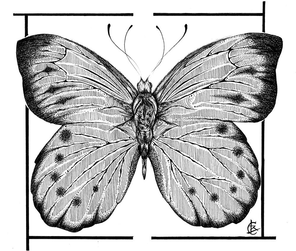 Butterfly by Lauren R Covarrubias