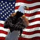 Bald Eagle and US Flag by NaturePrints