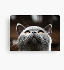 What Are you waiting for? Theres my chin Canvas Print