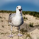 Seagulls Dune by JonnisArt