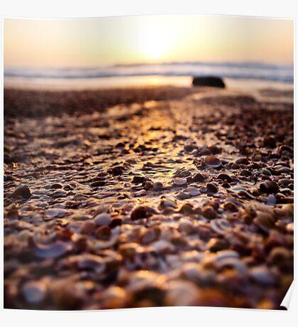 shells@sunset Poster