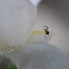 Iris Climbing by aprilann