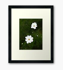 Daisies on Green Framed Print