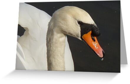 A Swan's Face by Vicki Spindler (VHS Photography)