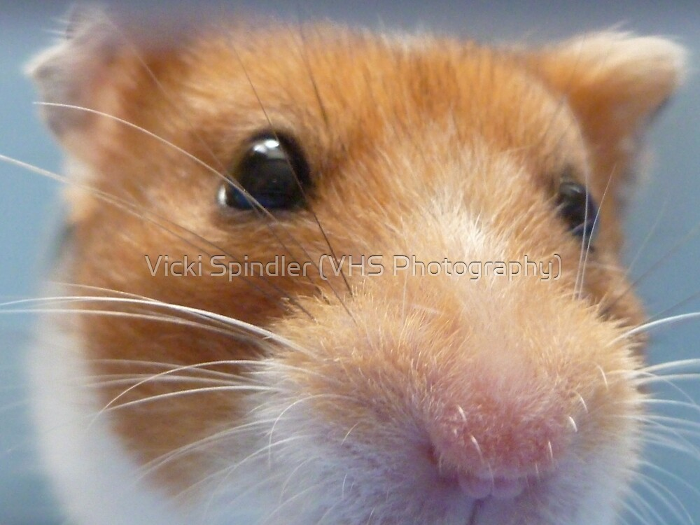 I Smell... A Camera? by Vicki Spindler (VHS Photography)