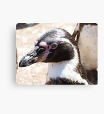 Beaky Penguin Canvas Print