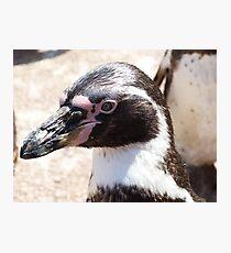 Beaky Penguin Photographic Print