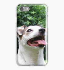 Jack russel 1 iPhone Case/Skin