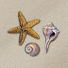 Beach Treasures by James & Laura Kranefeld