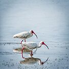Pair of Ibis by J. Day